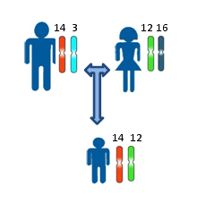 Принцип установления отцовства или материнства, по наследованию одинаковых аллелей аутосомных локусов. Различными цветами и буквами показаны различные аллели одного и того же локуса