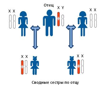 Принцип установления сводного родства по отцовской линии между предполагаемыми сводными сестрами. Показана передача Х-хромосомы по мужской линии. Отец и дети женского пола несут в своих клетках одинаковые копии Х-хромосомы. Для определения родства в данном случае исследуются генетические маркеры располагающиеся на Х-хромосоме.