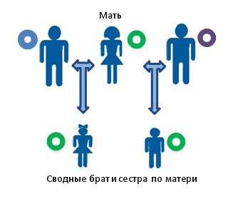 Установление сводного родства по материнской линии между предполагаемыми сводными братьями, или сестрами, или двоюродными братом и сестрой. В виде разноцветных кругов показано различающиеся копии мтДНК.