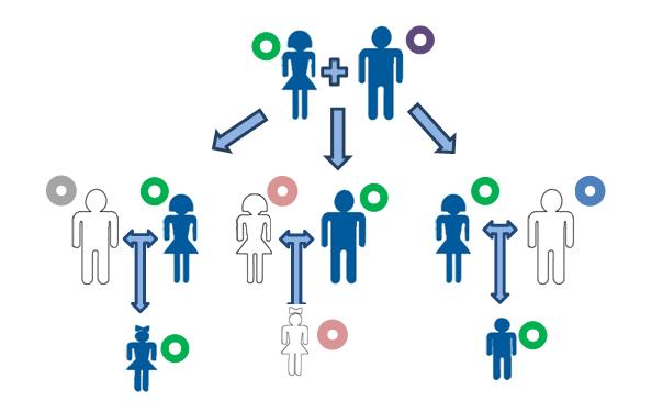 Принцип наследования мтДНК. В виде разноцветных кругов показано различающиеся копии мтДНК.